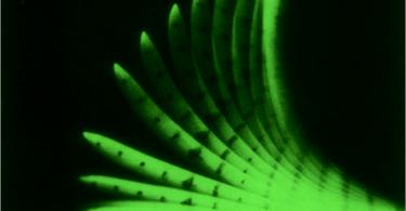 Corn shoot : negatively gravitropic